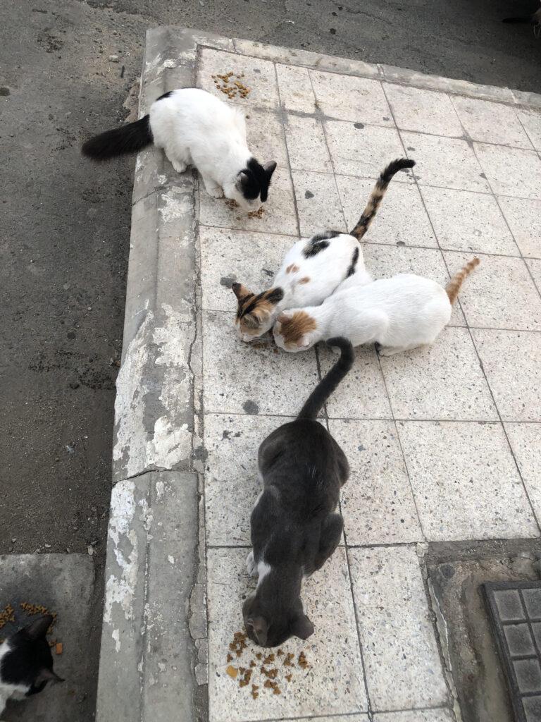 4 of my street cats having breakfast at 6 AM