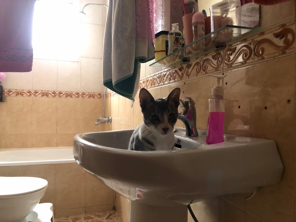 Maček Tomi sedi v umivalniku v kopalnici.