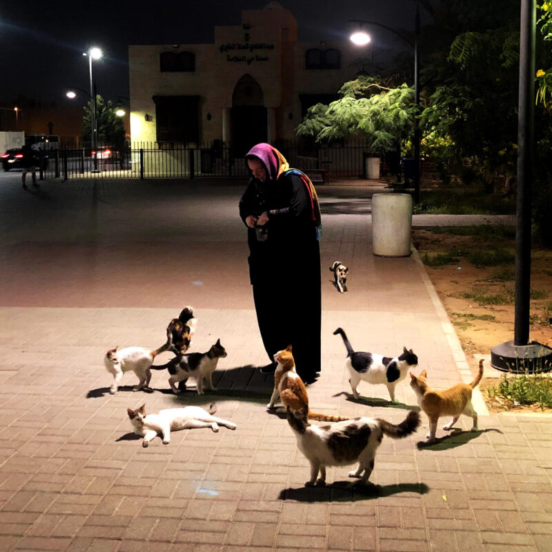 feeding a group of cats at night